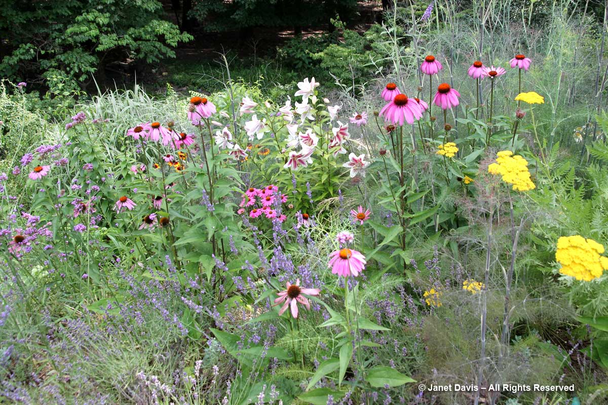 Colourful perennials-Peg Bier
