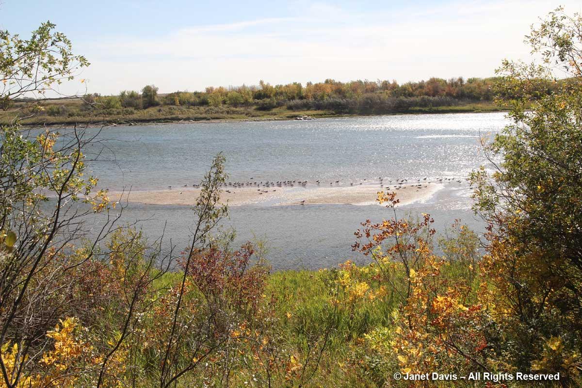 Sandbar-South Saskatchewan River-Wanuskewin