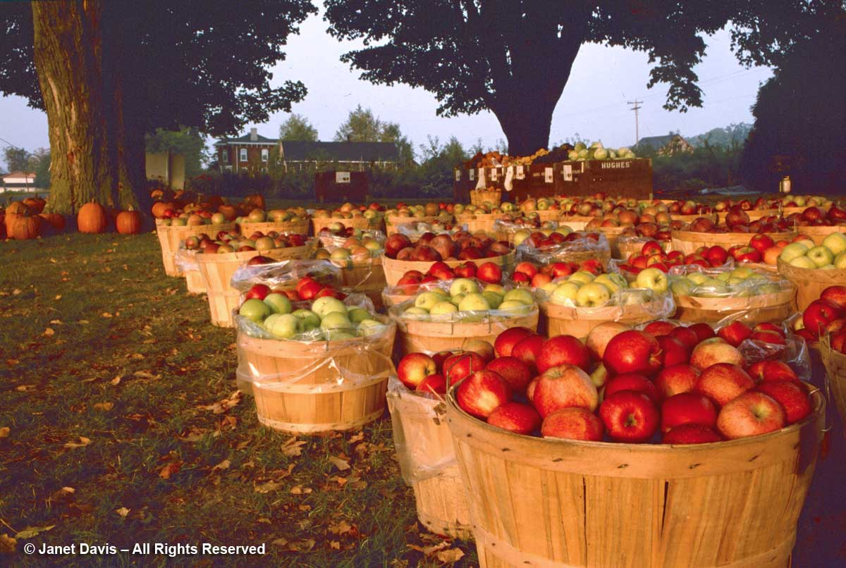 1998-Hughes' Orchard-Picton