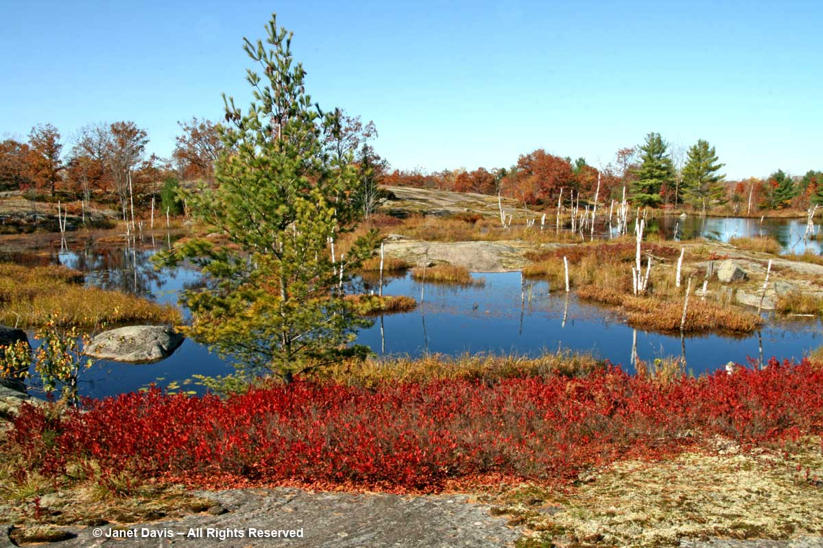 2008-Torrance Barrens-beaver pond