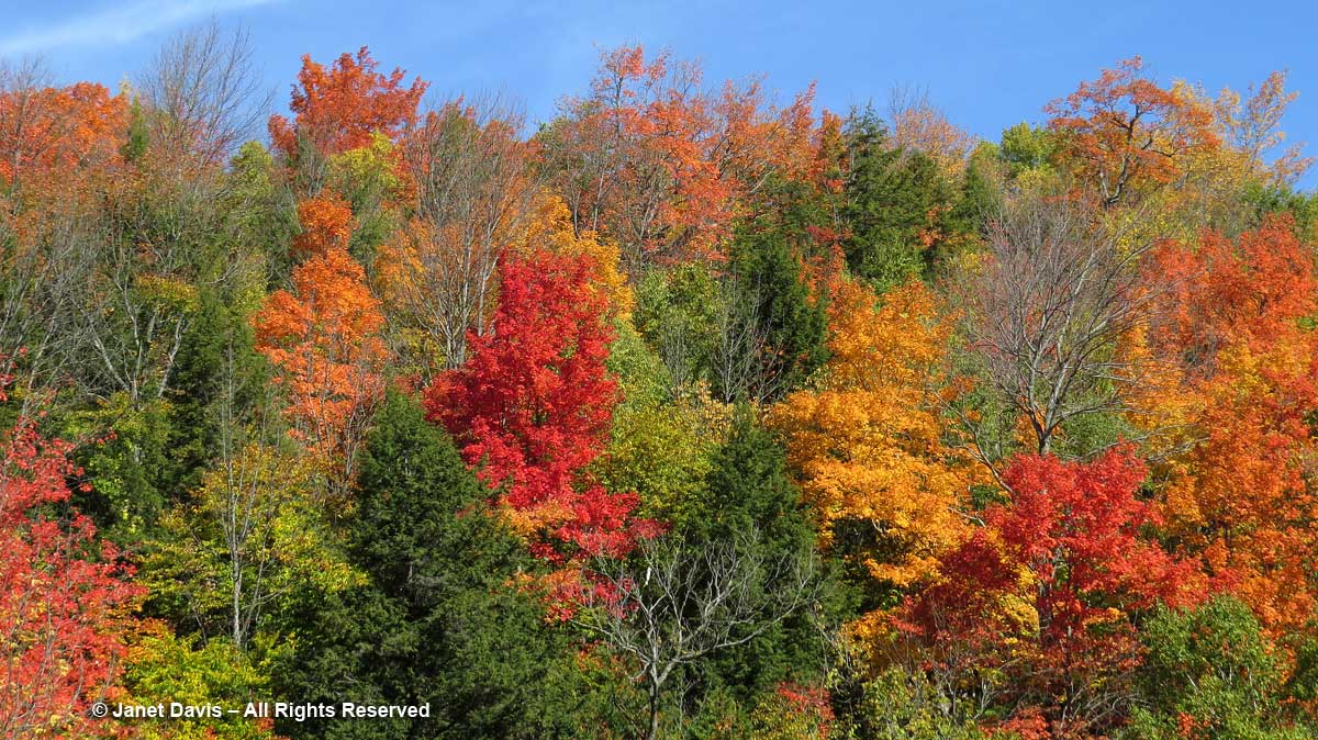 2016-Glen-Huron-Fall-Colour