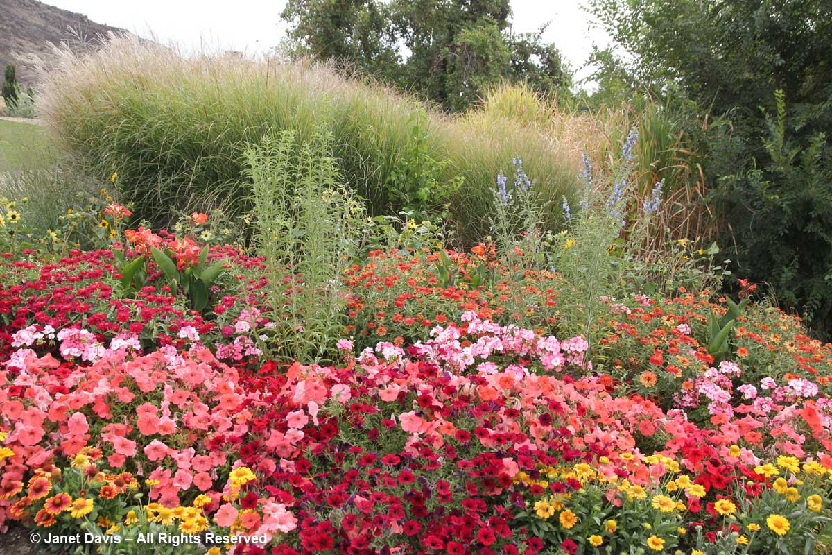 Annuals - Idaho Botanical Garden