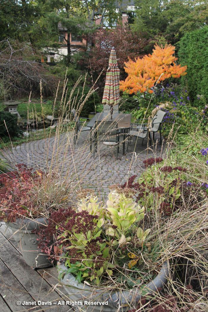 Janet Davis-garden-autumn