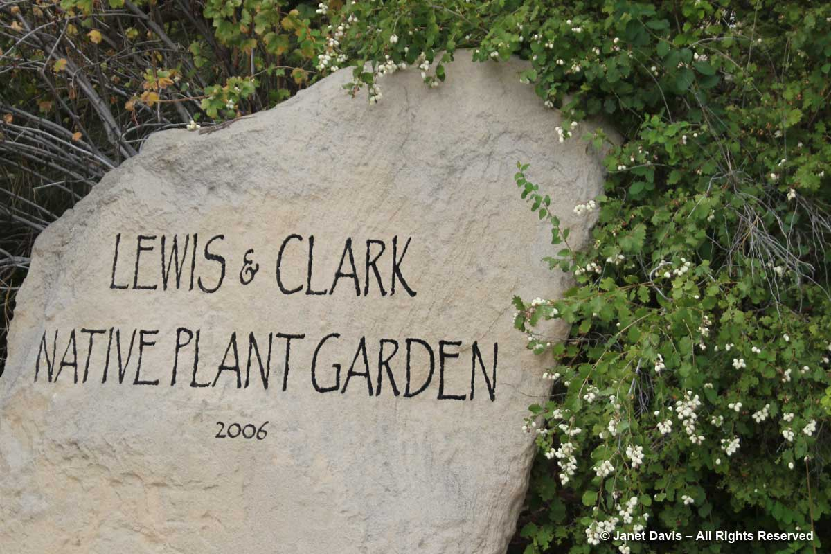 Lewis & Clark Native Plant Garden-snowberry-Idaho Botanical