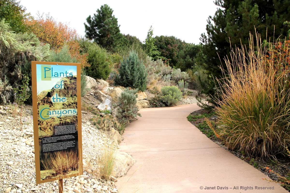 Plants of the Canyons-Idaho Botanical