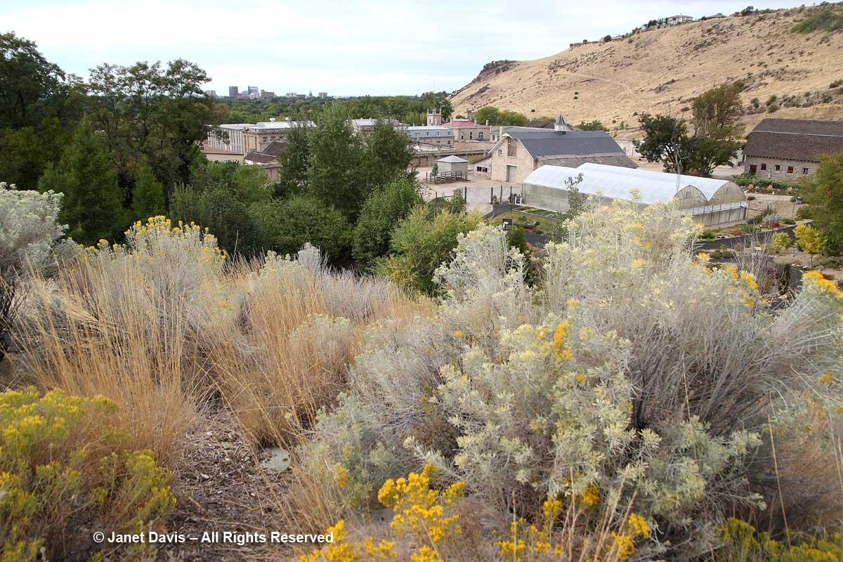 Promontory view-Idaho Botanical
