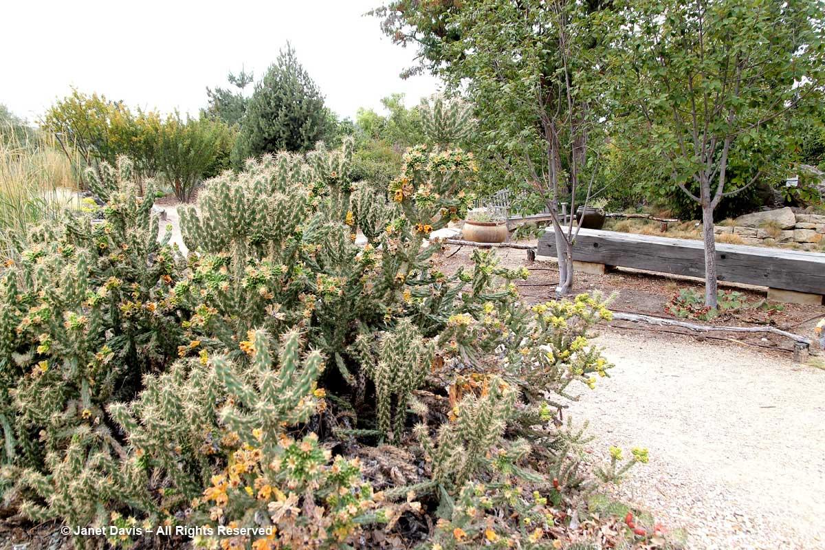 Summer Succulent Garden-Cactus-Idaho Botanical