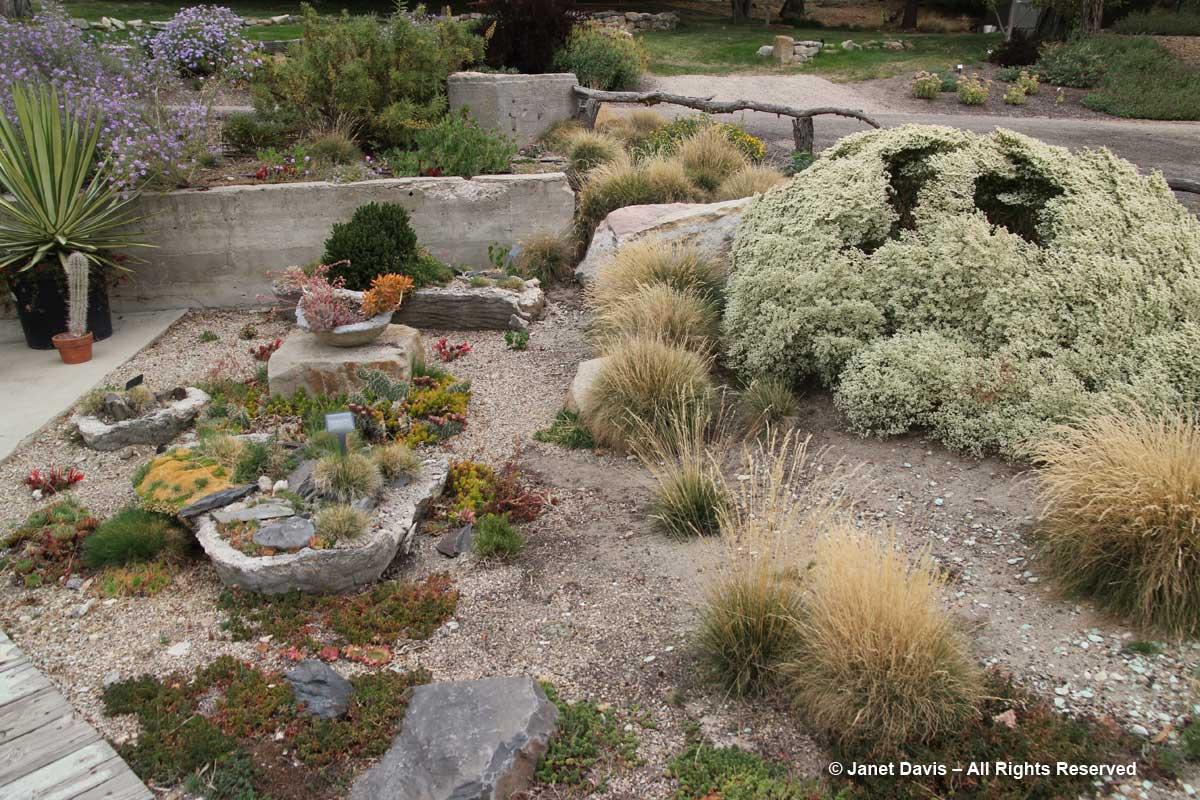 Summer Succulent Garden-Idaho Botanical