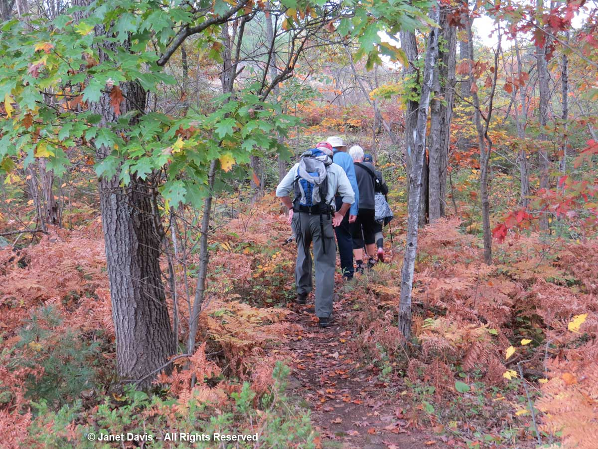 2017-Hikers-in-oaks-Torrance Barrens