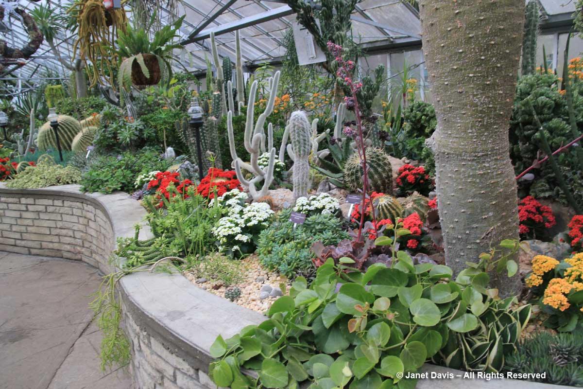 Allan Gardens-Arid House-Christmastime