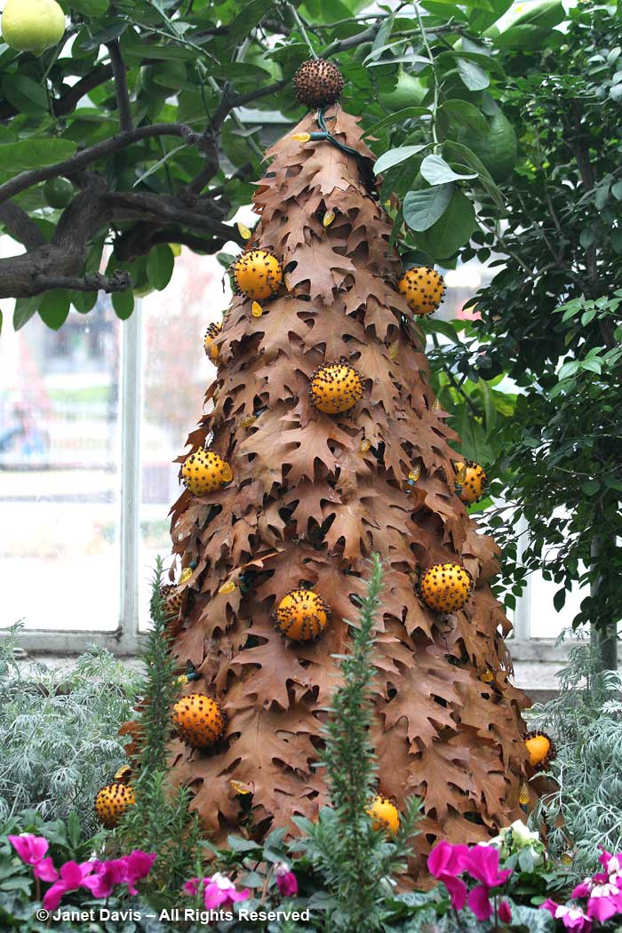 Allan Gardens-Red oak leaf & spiced orange pomander ball topiary tree