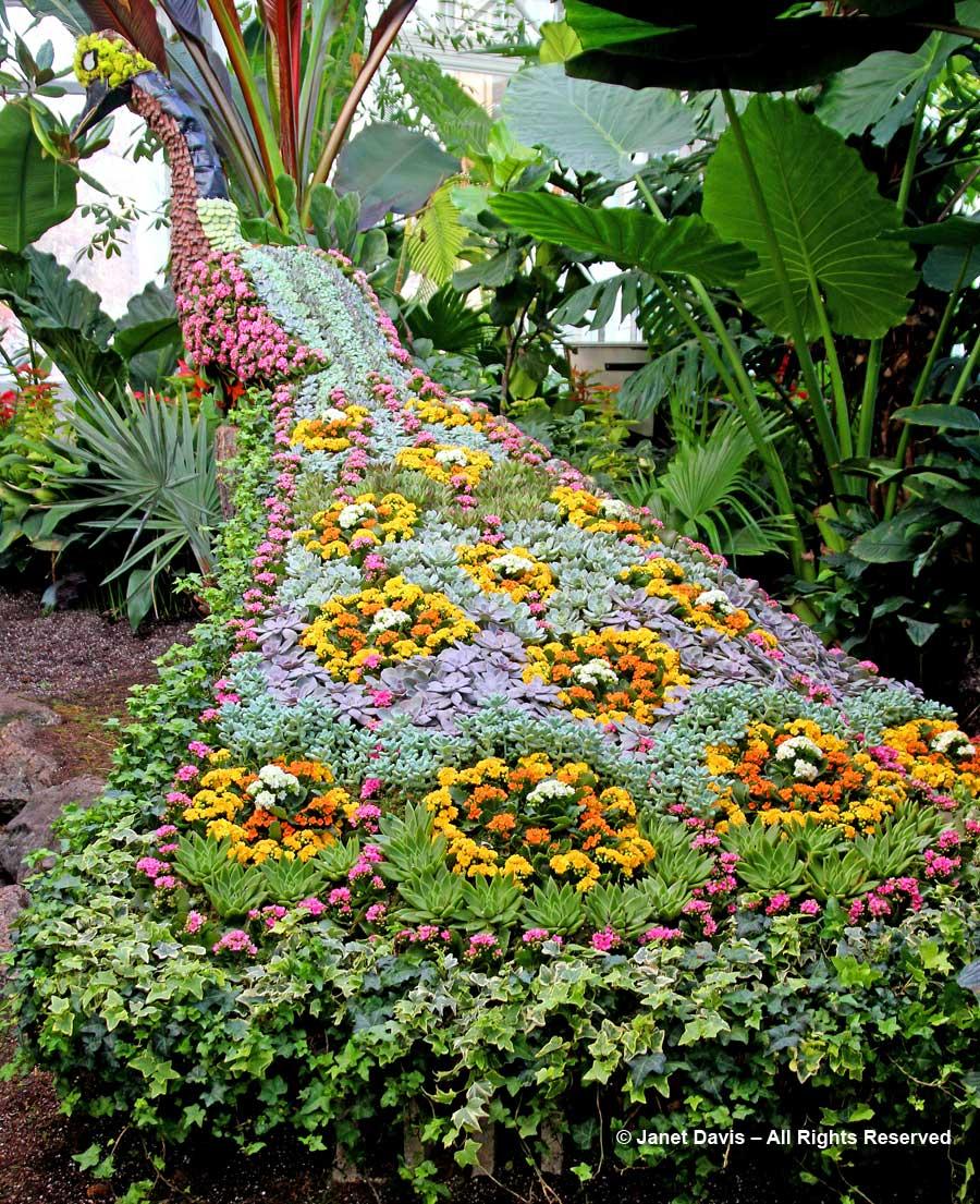 Allan Gardens-Succulent Peacock-Christmas 2017