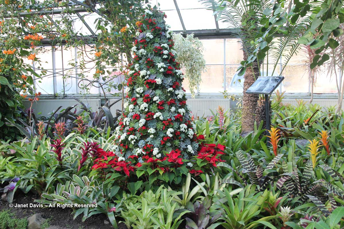 Allan Gardens-Succulent Tree-Christmas 2017