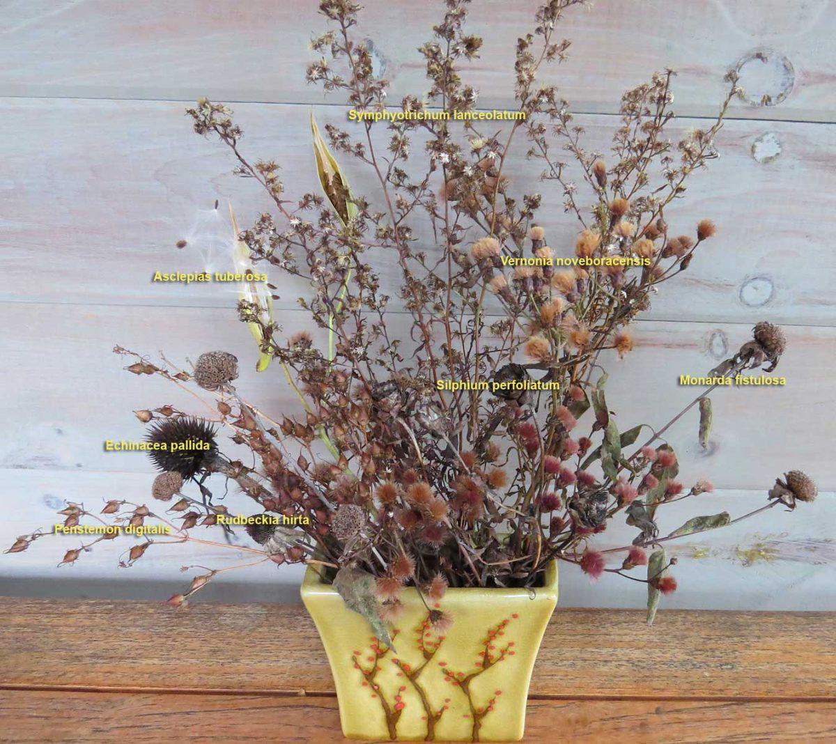 Bouquet-November meadow seedheads-Lake Muskoka