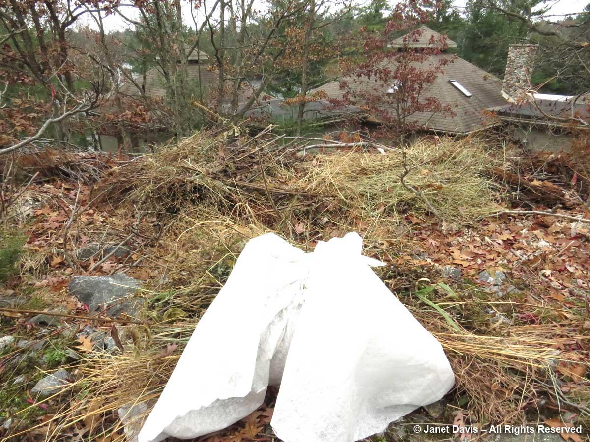 Compost pile-Lake Muskoka