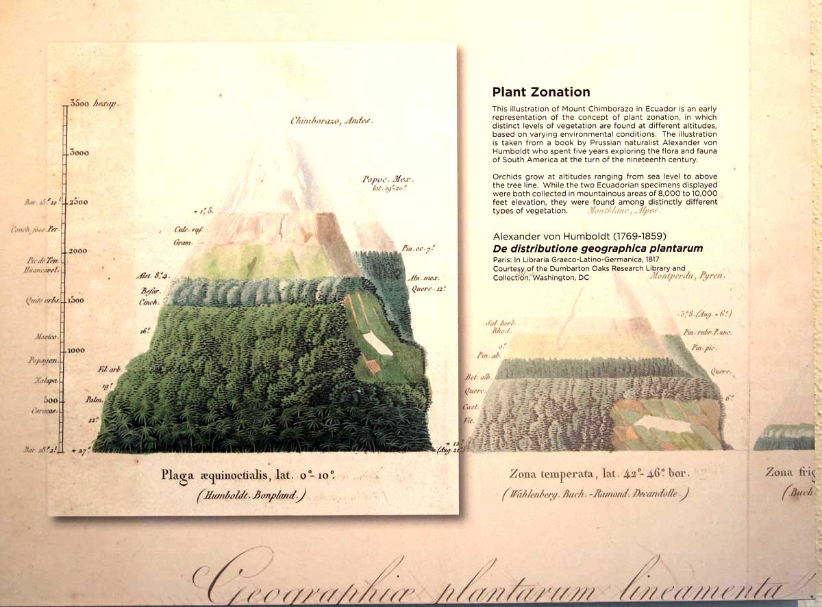 Alexander von Humboldt-Mount Chimborazo