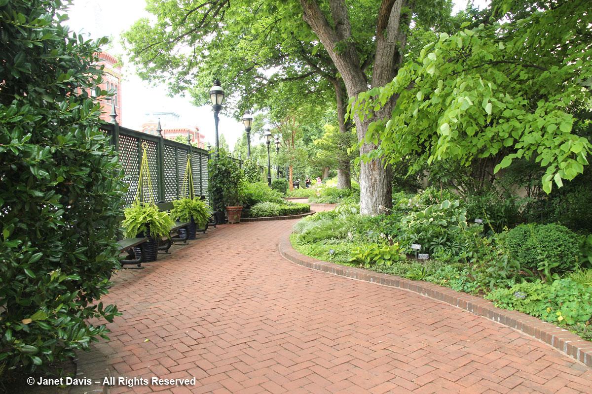American elms &-path-Ripley Garden