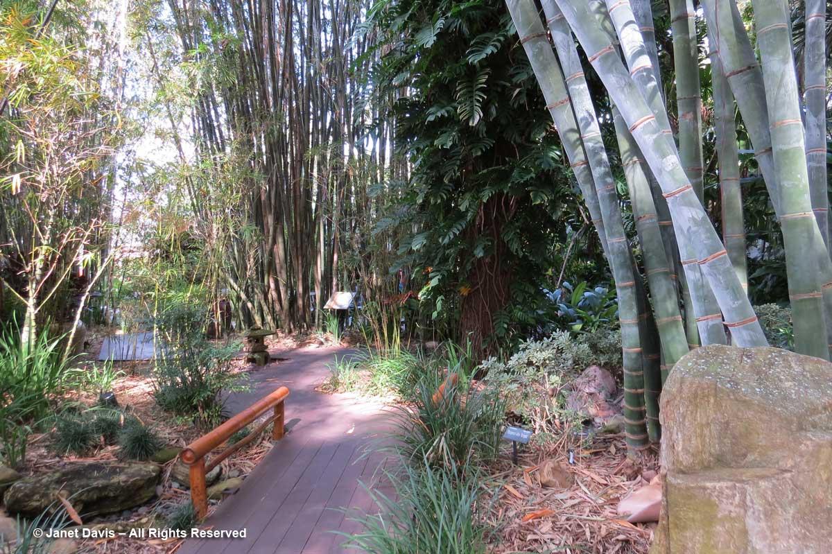 Bamboo Pavilion-Dendrocalamus giganteus-Marie Selby Botanical Garden
