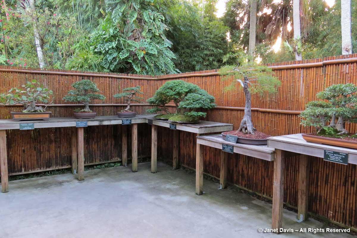 Bonsai Garden-Marie Selby Botanical Gardens