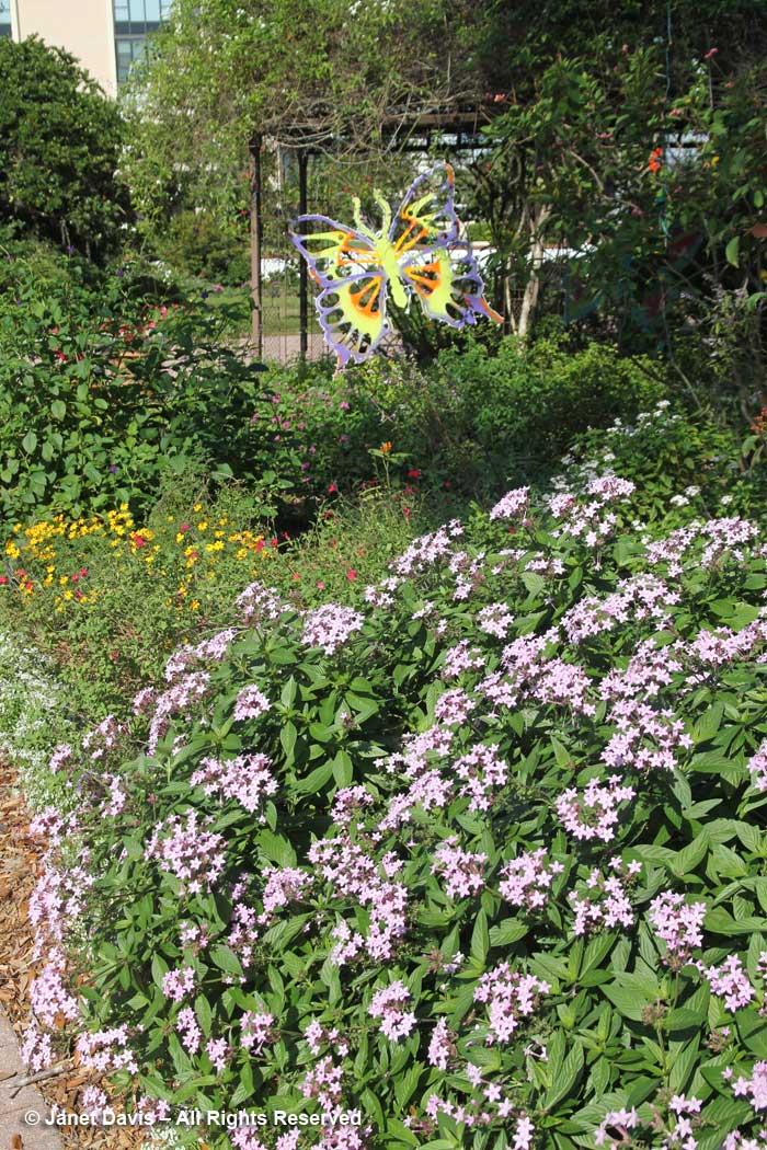 Butterfly Garden-Marie Selby Botanical Gardens