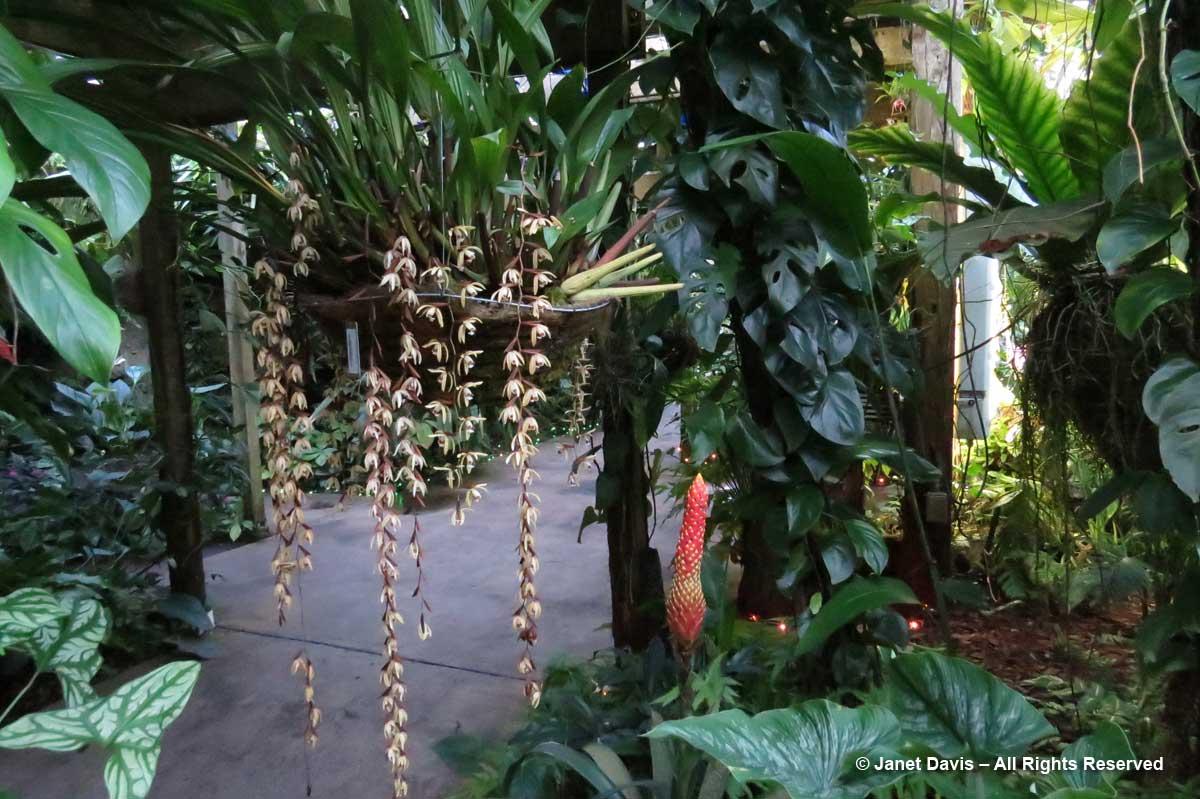 Conservatory-1
