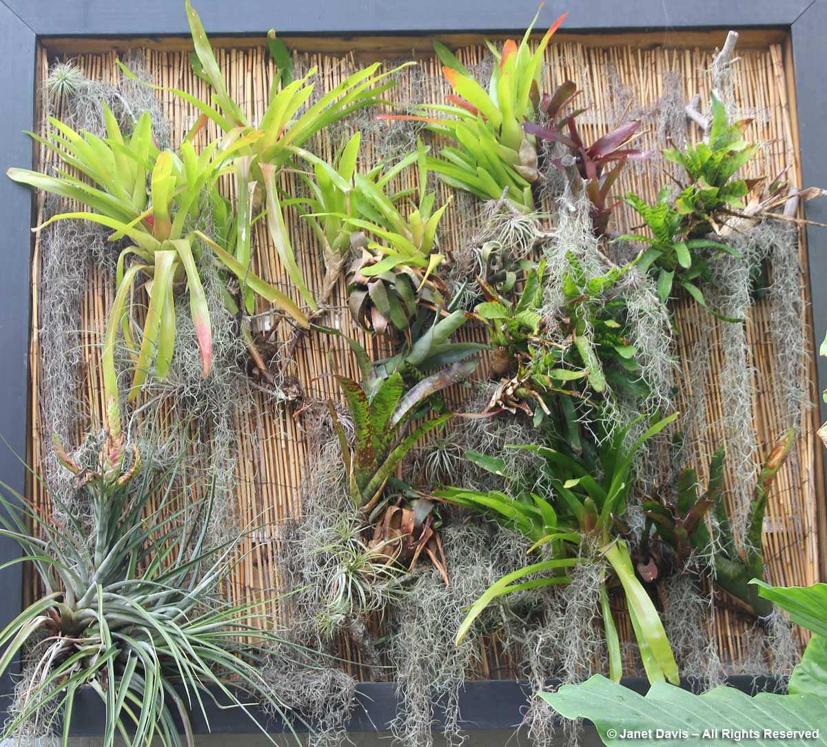 Epiphyte Display-Marie Selby Botanical Gardens
