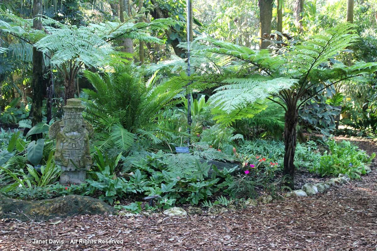 Fern garden-Marie Selby Botanical Gardens