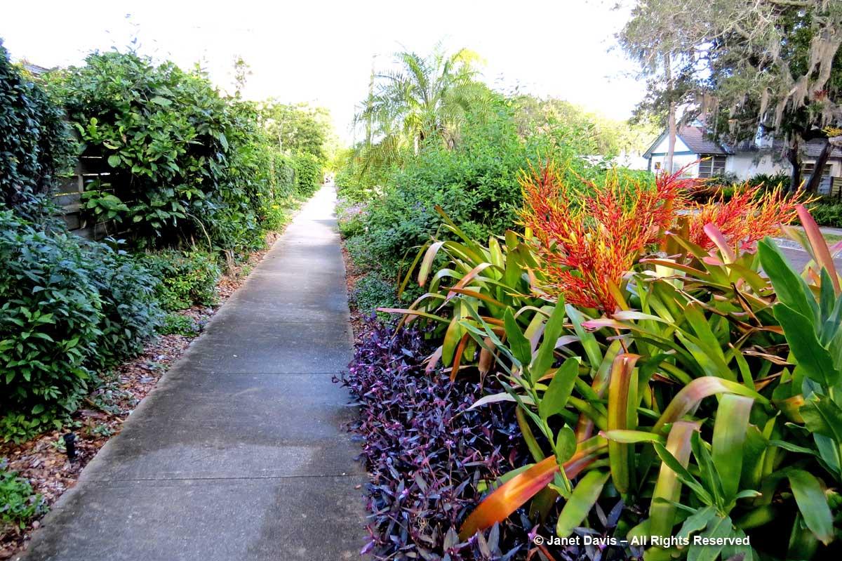 FlowerWalk-Aechmea-Marie Selby Botanical Gardens