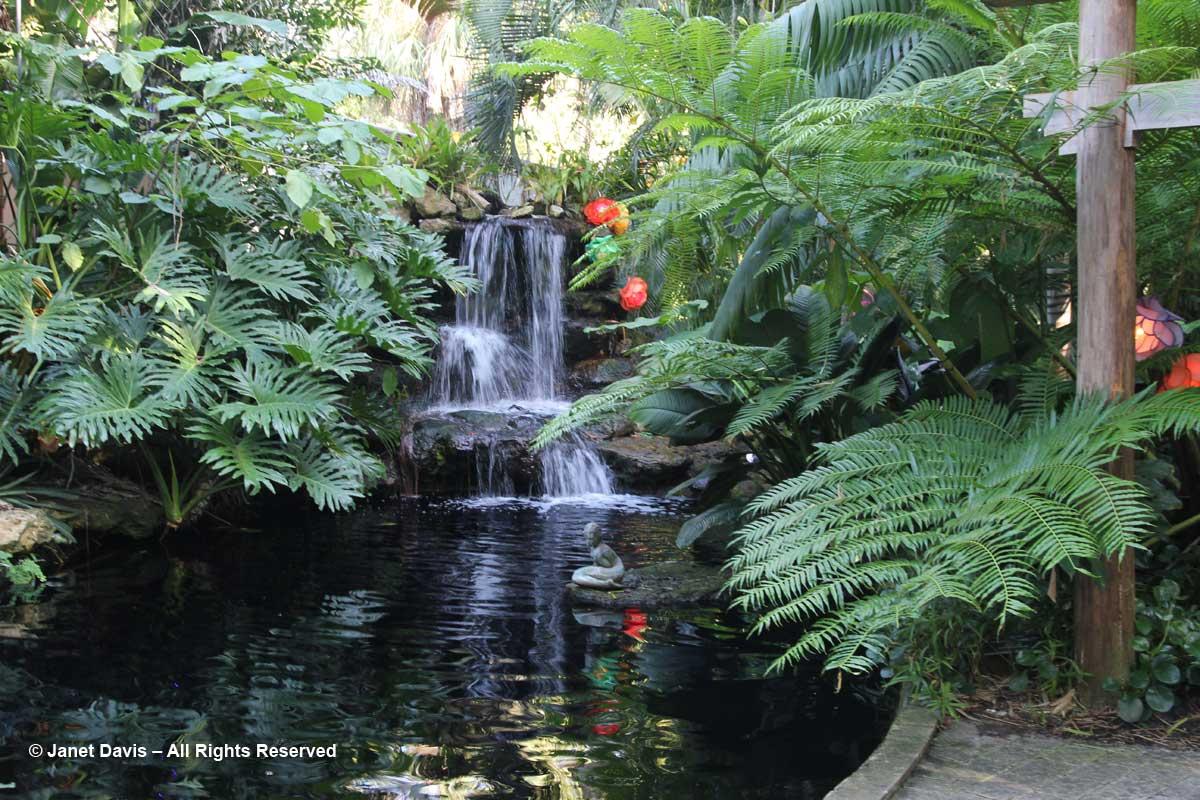 Koi Pond-Marie Selby Botanical Gardens