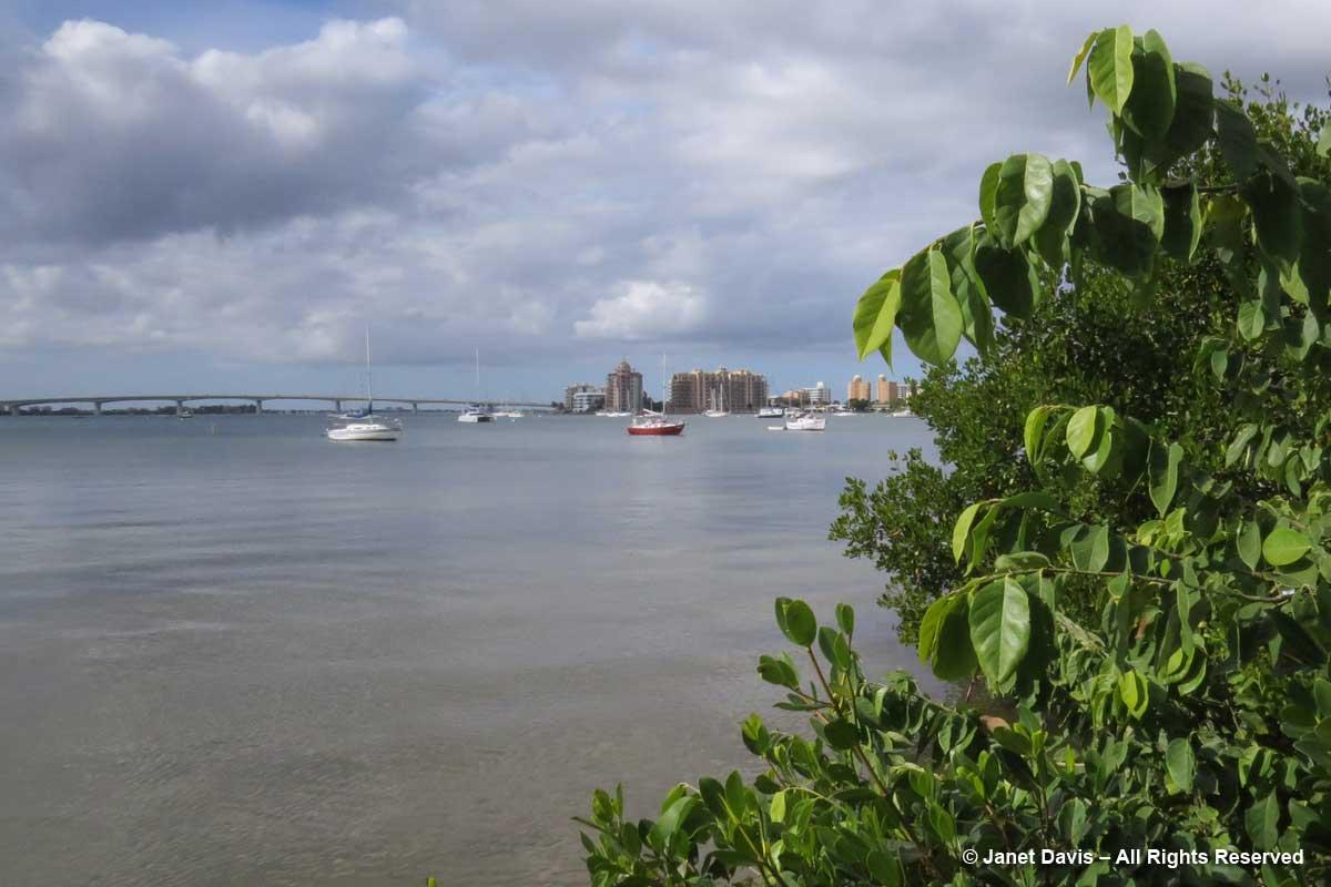 Mangrove Walk-Sarasota Bay & John Ringling Causeway-Marie Selby Botanical Gardens