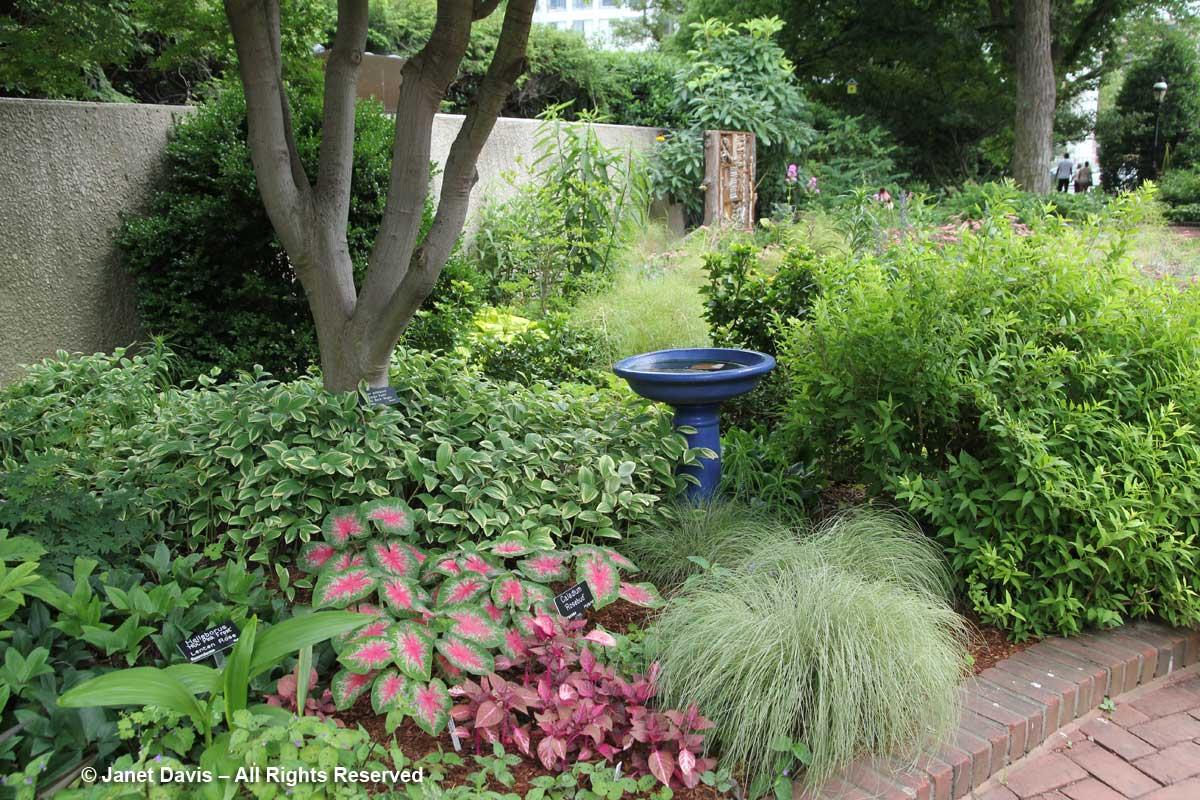 Shade border-Ripley Garden