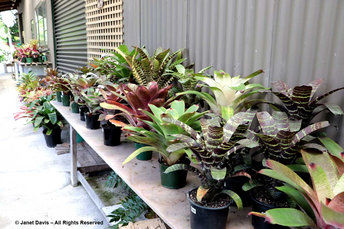 Bromeliad nursery-Totara Waters