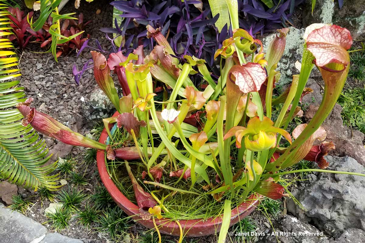 Carnivorous plants-Totara Waters