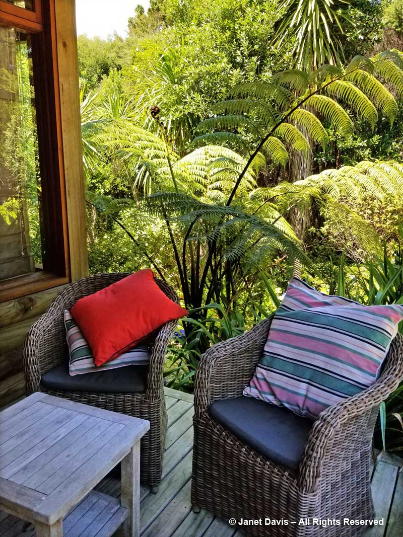 Chairs & tree ferns-Omaio