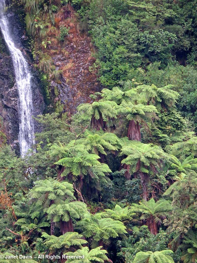 Cyathea smithii-katote-soft tree fern-Doubtful Sound-waterfall