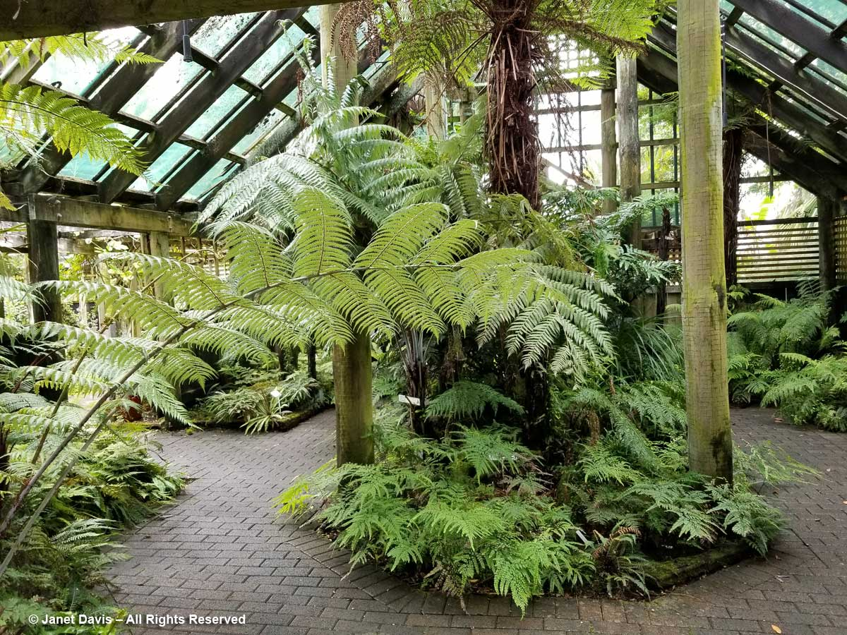 Marge Maddren Fernery1-Botanica-Whangerai