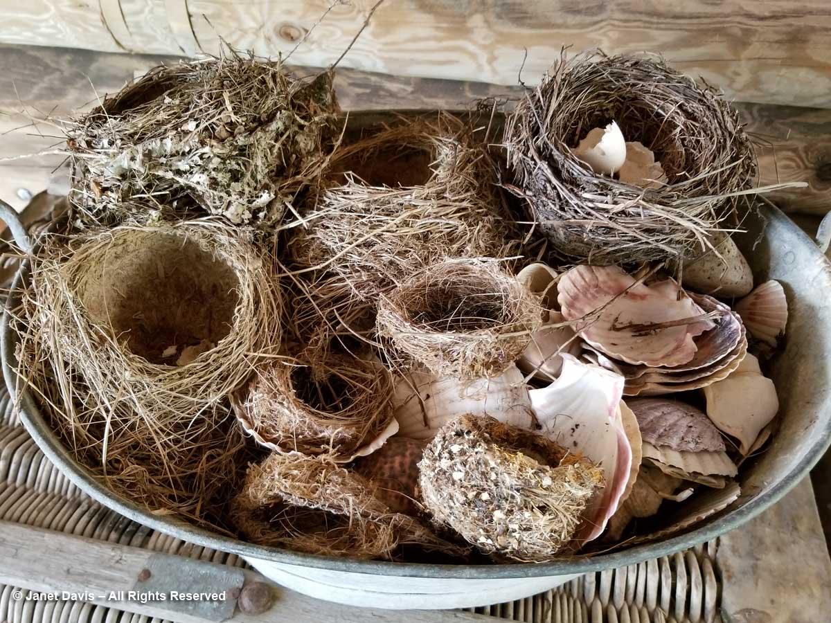 Nests-Omaio