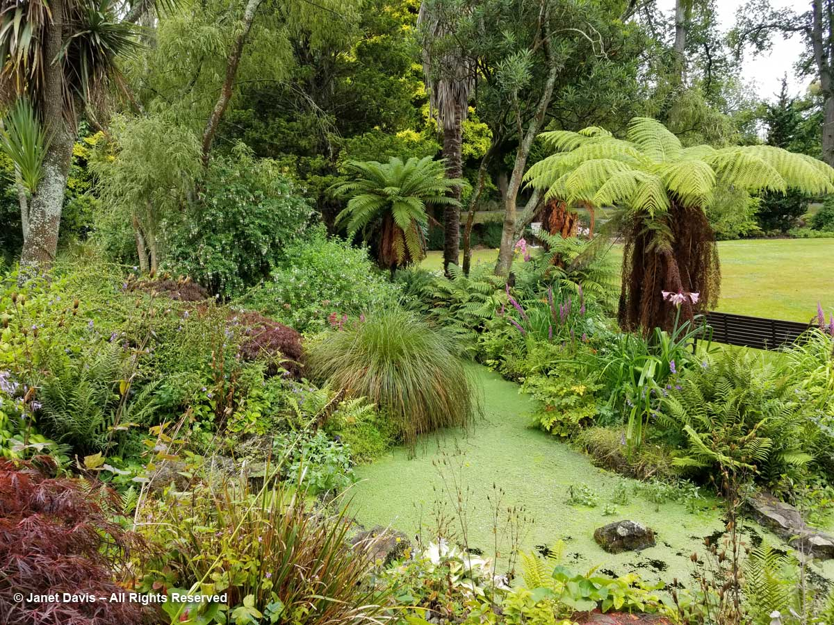 Oamaru Public Gardens-Tree ferns in garden