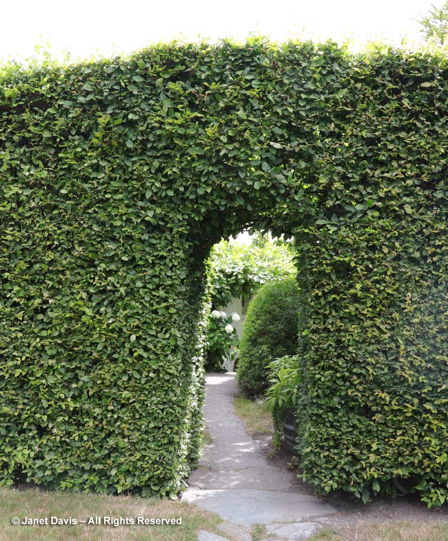 Arch in hedge-Janet Blair-Queenstown