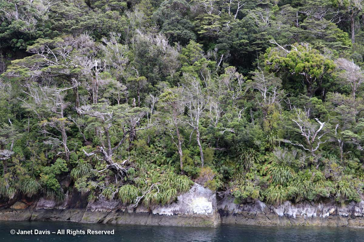 Elizabeth Island-shore-Doubtful Sound