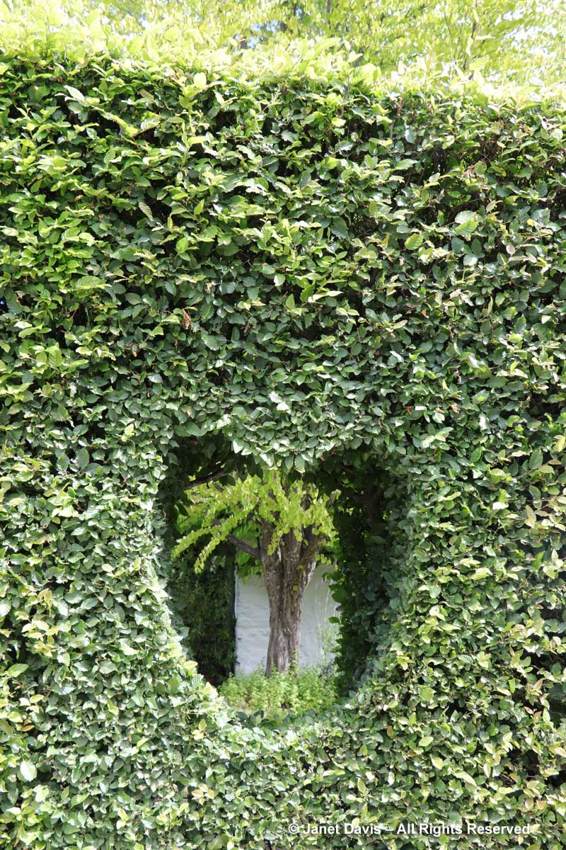 Heart-shaped window in hedge-Janet Blair-Queenstown