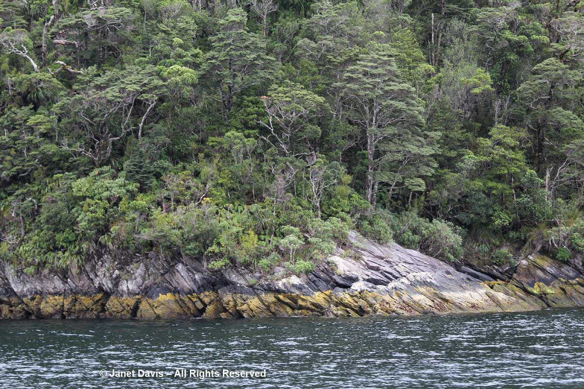 Shore rock formation-Doubtful Sound