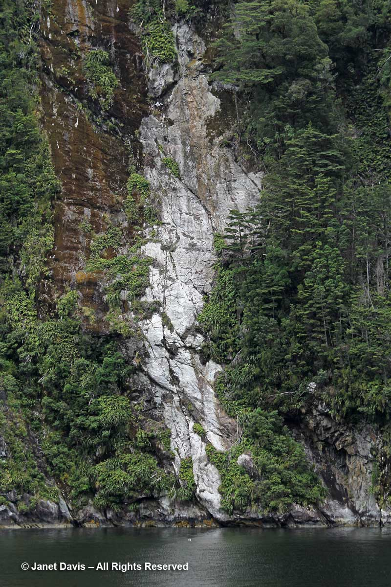 Tree avalanche-Doubtful Sound
