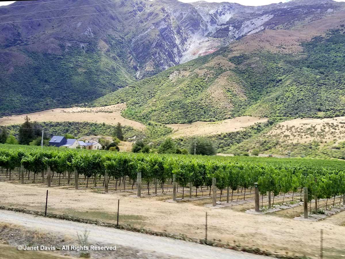 Vineyard-Otago-Kawarau