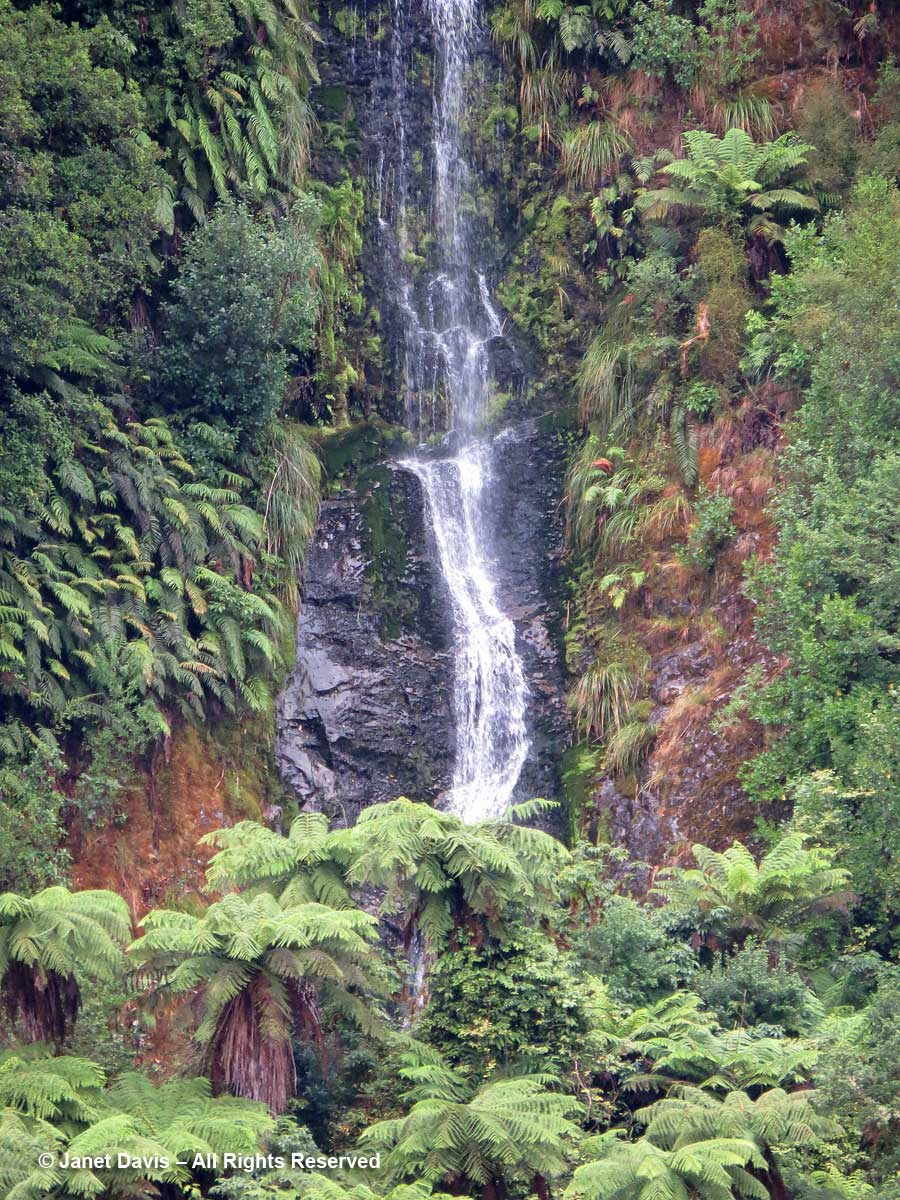 Waterfall & tree ferns-katote-Cyathea smithii-Doubtful Sound