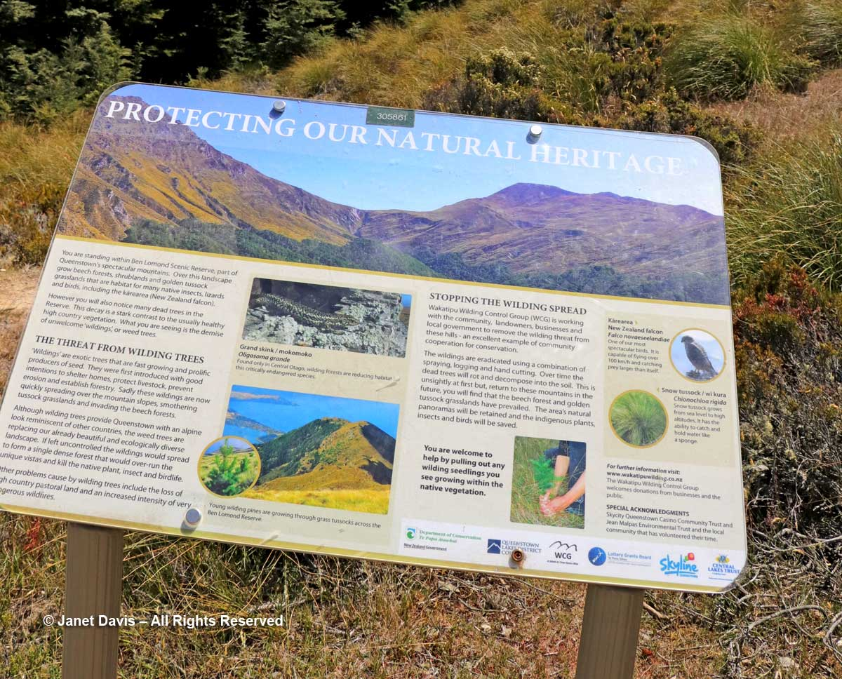 Wilding control sign-Ben Lomond-Queenstown
