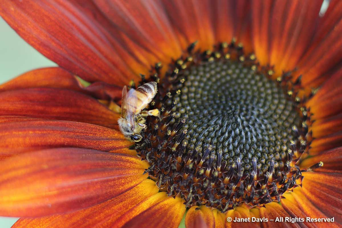 Pollen for Honey Bees in a Rainbow of Colours | Janet Davis Explores ...