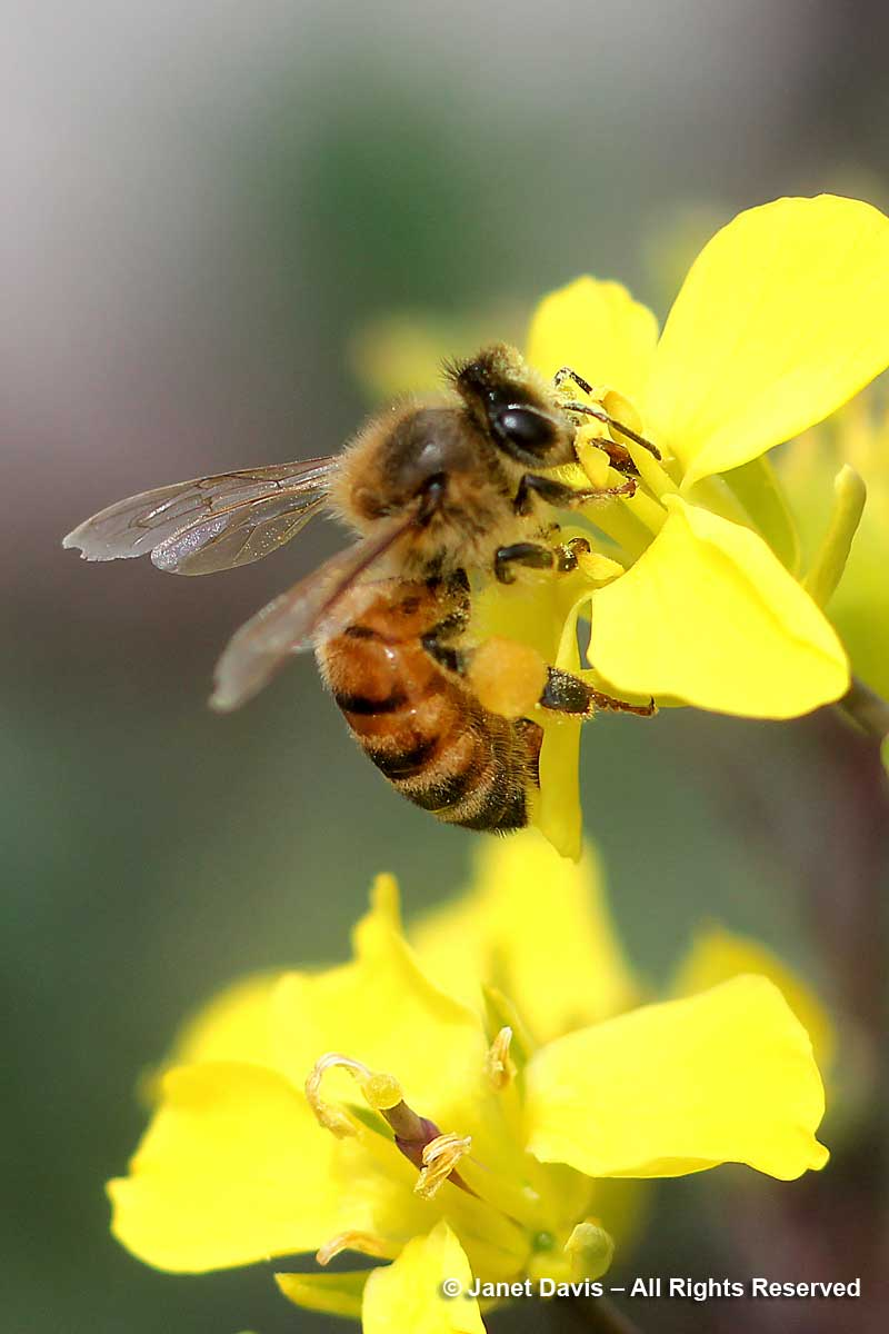 Pollen For Honey Bees In A Rainbow Of Colours Janet Davis Explores
