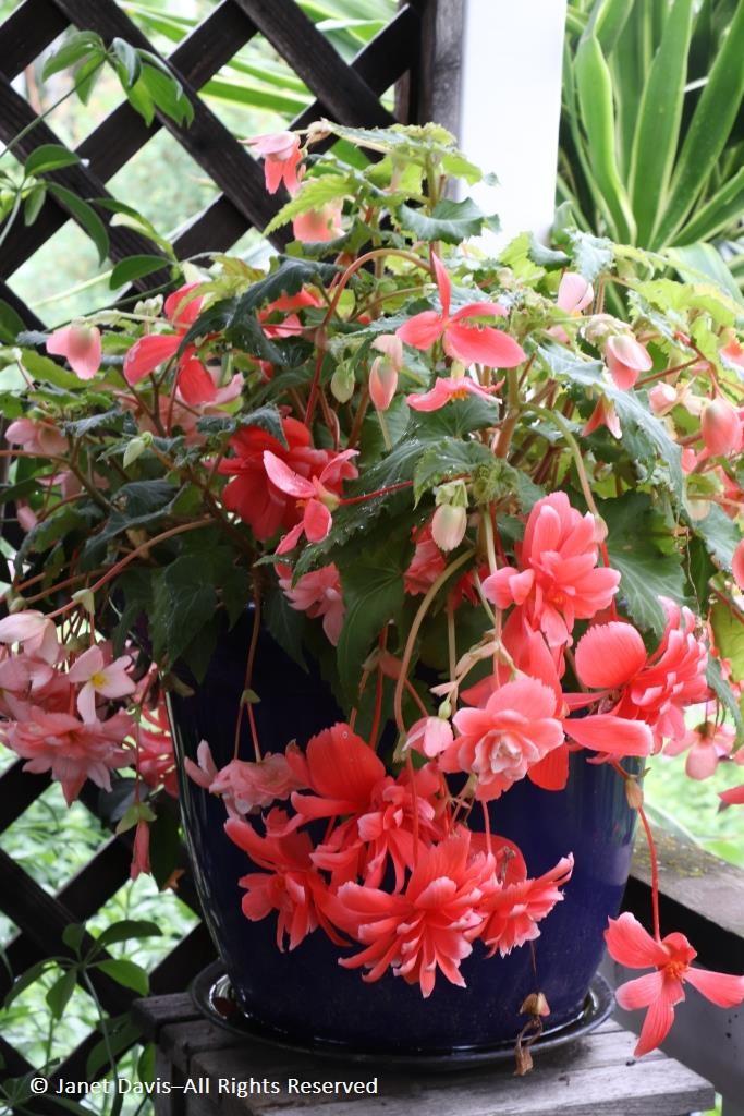 Annuals/Tropicals | Janet Davis Explores Colour
