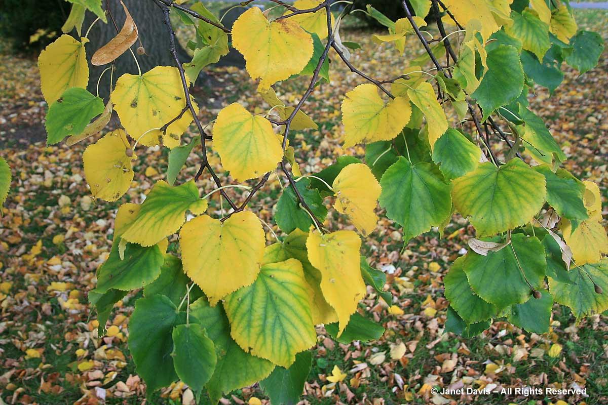 Yellow Gold Janet Davis Explores Colour